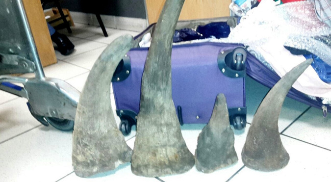 rhino horn, OR Tambo, South Africa