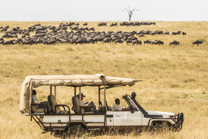 great migration, game drive vehicle, wildebeest