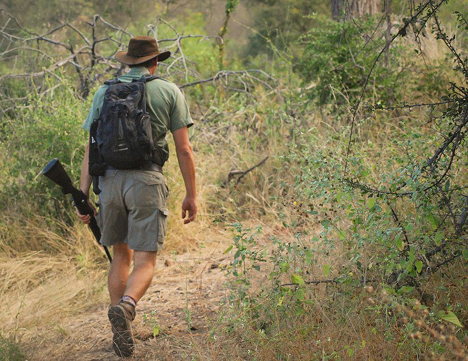 Walking safari, safety, guide