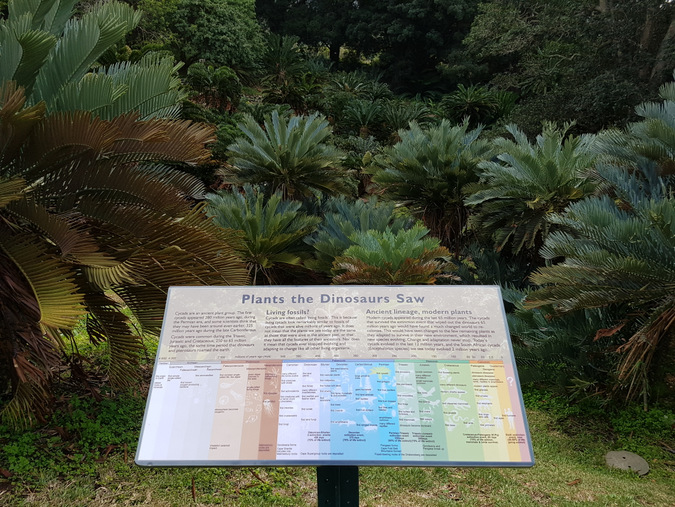 Dinosaurs and cycads poster, Kirstenbosch National Botanical Gardens, South Africa