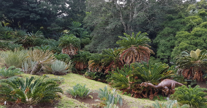 Dinosaur, cycads, Kirstenbosch National Botanical Gardens, South Africa