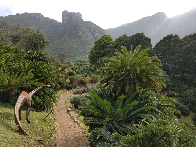 Dinosaur, cycads, Table Mountain, Kirstenbosch National Botanical Gardens, South Africa