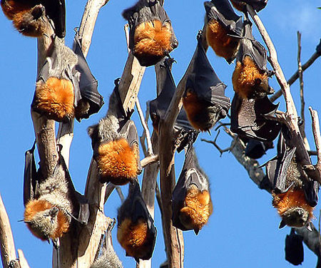 bats hanging from a tree