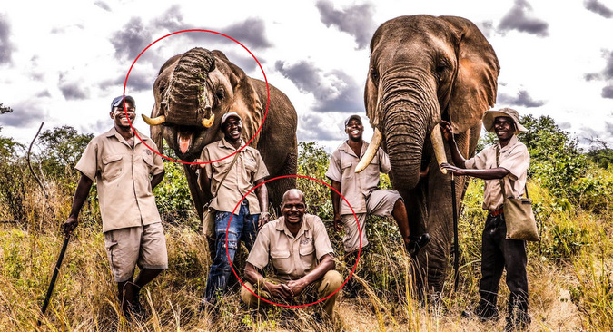 two elephants and their handlers, Adventure Zone, Vic Falls, Zimbabwe
