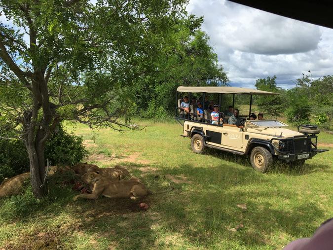 kids on safari, lions, wildlife, game drive