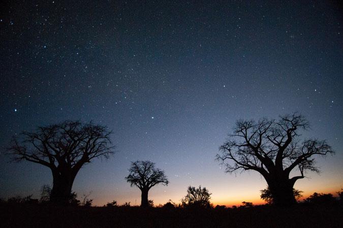 baobabs, sunset, night sky, Africa