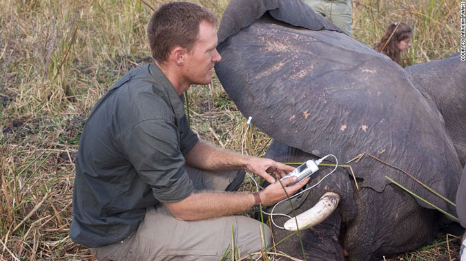 elephant translocation, veterinarian, conservation, Malawi