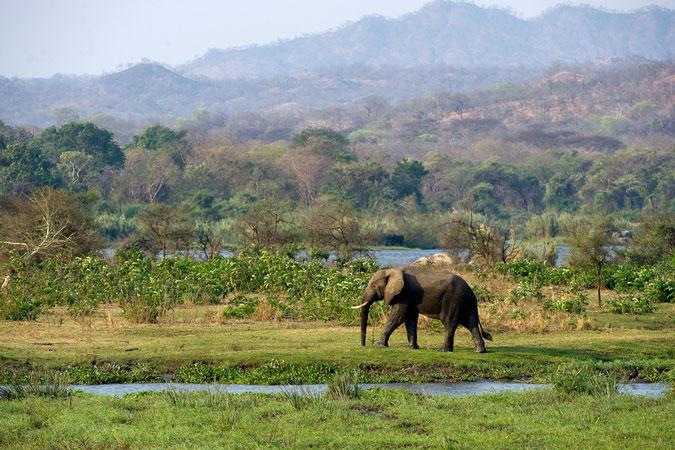 elephant, Majete Wildlife Reserve, Malawi