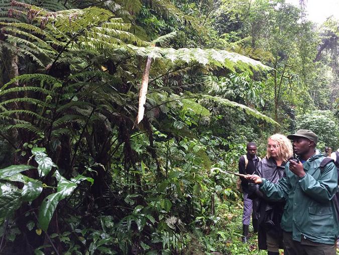Mabira Forest, people trekking, Uganda