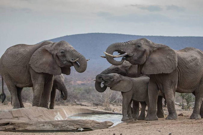 elephants, waterhole, Saruni Samburu, Kenya