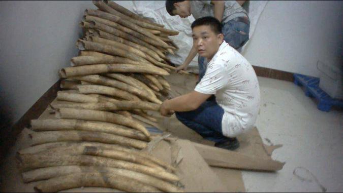Ivory smugglers, ivory, China