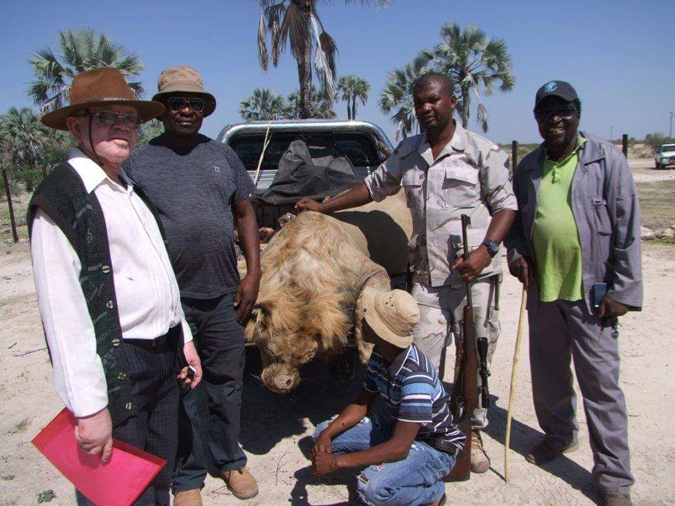 lion kill, Namibia
