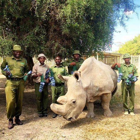 ForRangers, socks, white rhino, raising funds