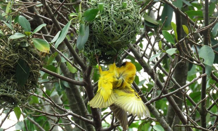 birdlife, Semuliki National Park, Uganda