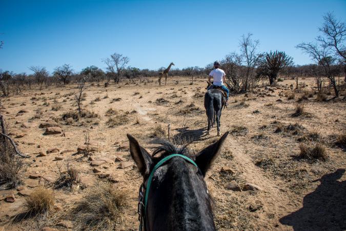 horseback safari, giraffe, South Africa