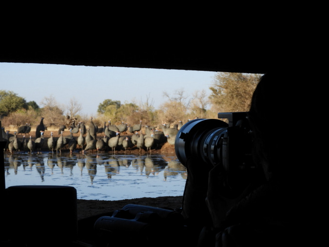 photographic hide, birdlife, wildlife, Botswana