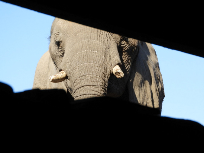 photographic hide, elephant, wildlife, Botswana