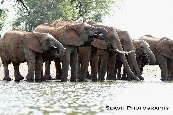 elephants, waterhole, Jaci's Lodges, Madikwe, South Africa