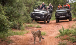 game drive, wildlife, Kruger National Park, South Africa