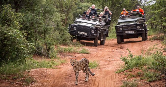 game drive, wildlife, Kruger National Park, South Africa