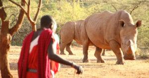 rhino, Maasai
