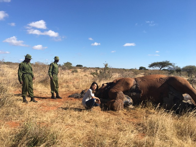 dead elephant, rangers, Tsavo West National Park