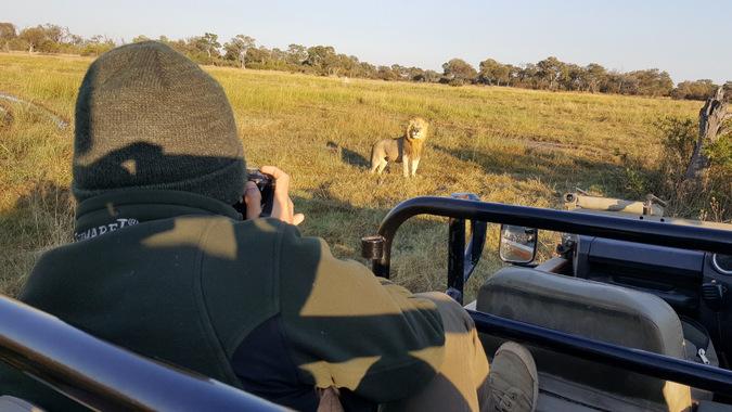 lion, safari, Africa, game drive vehicle, wildlife