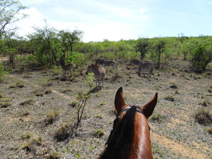 horseback safari, zebra, South Africa