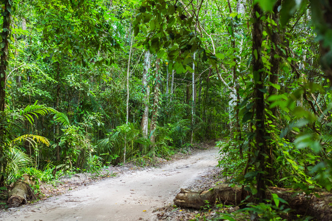 tropical forest, dirt road ©Manta Resort