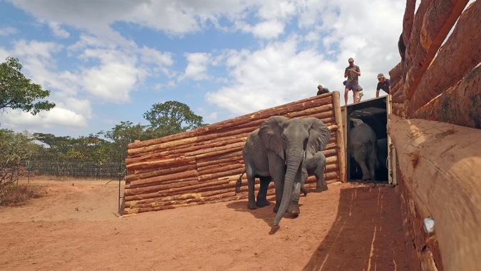 elephants, translocation, boma, Malawi