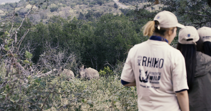 white rhino sighting, Wild Rhino, Vietnamese youth, bush walk, South Africa