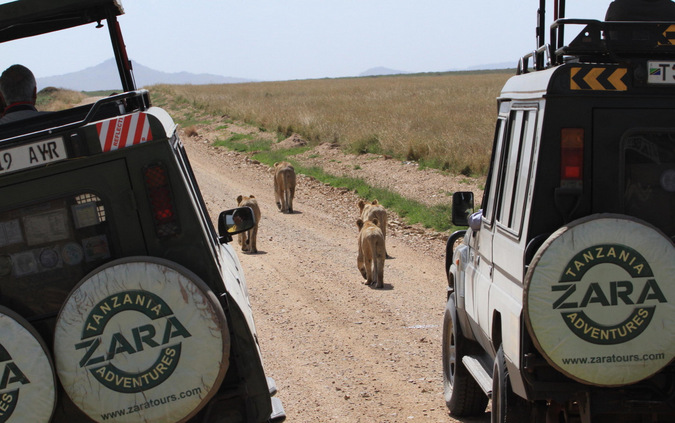 lions, game drive vehicles, Tanzania