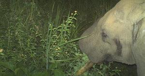 elephant, camera trap, wildlife, conservation