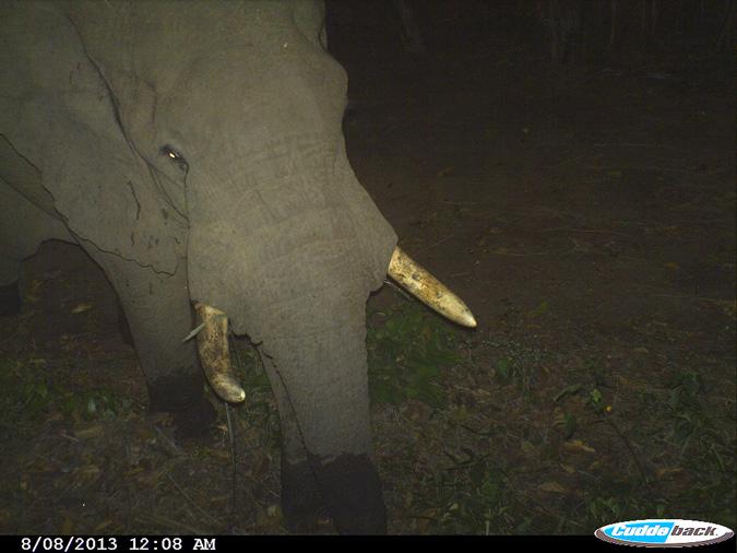 elephants-tanzania-crops-community-conservation