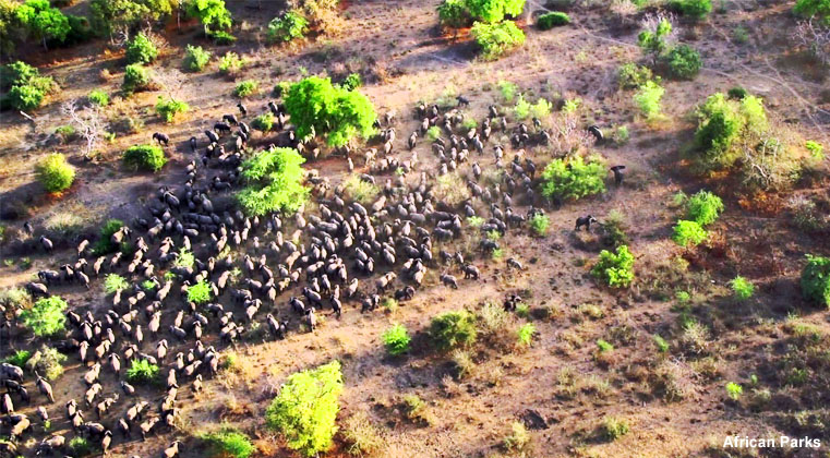 aerial view of wildlife