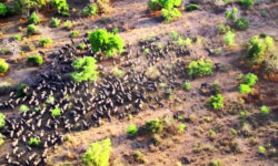 aerial view of wildlife in Zakouma National Park in Chad