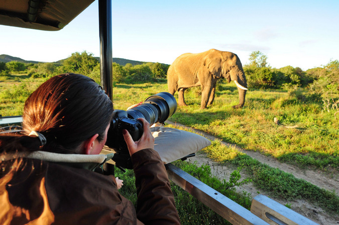 game drive vehicle, photographer, elephant, wildlife