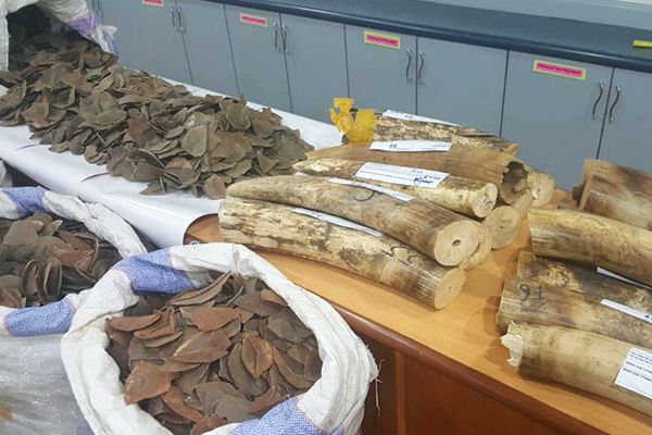 Malaysia, pangolin scales, elephant ivory, seizure