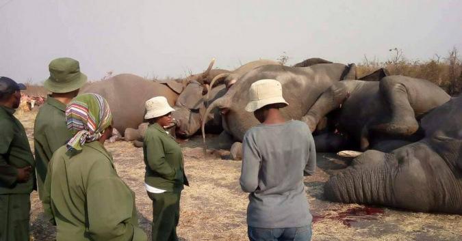 elephants, death, electrocuted, Botswana