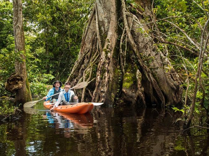 flooded forests, Odzala-Kakoua National Park, Congo