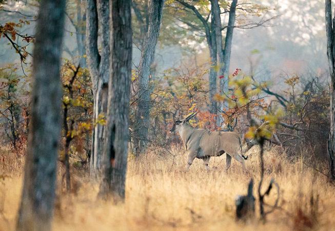 photographic safari, wildlife photography, Nsefu Sector, South Luangwa National Park, Zambia