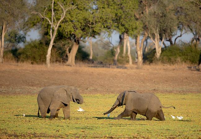 elephants, photographic safari, wildlife photography, Nsefu Sector, South Luangwa National Park, Zambia