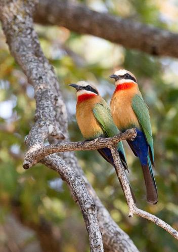 bird, photographic safari, wildlife photography, Nsefu Sector, South Luangwa National Park, Zambia