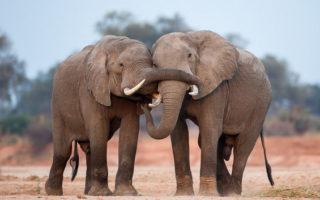 elephant, photographic safari, wildlife photography, Nsefu Sector, South Luangwa National Park, Zambia