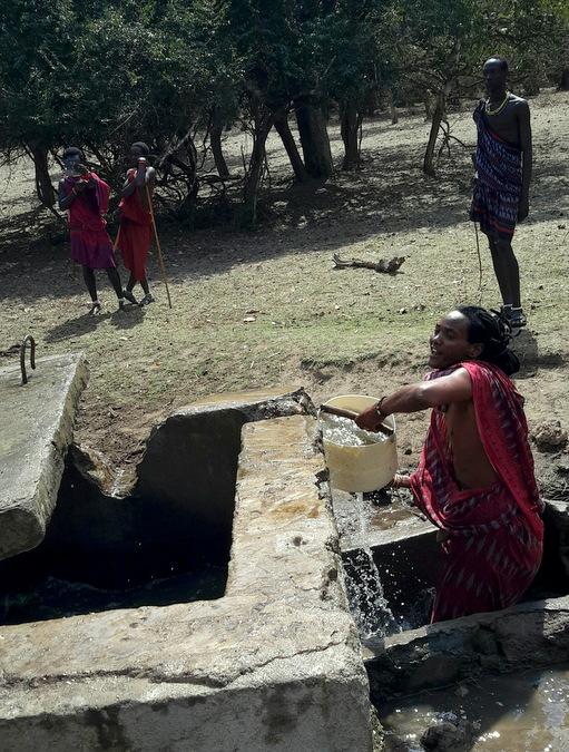 Maasai, cattle, water, culture, Maasai Steppe, Tanzania