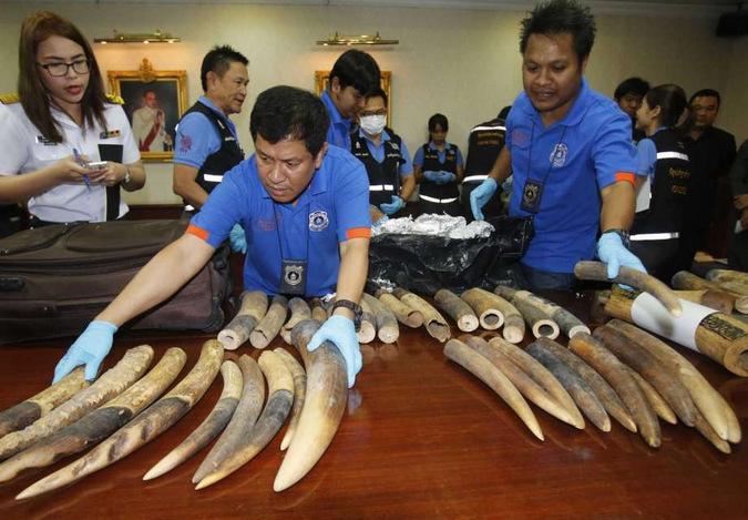 Seized ivory in Bangkok, Thailand