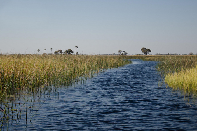 View of the Okavango Delta from the water