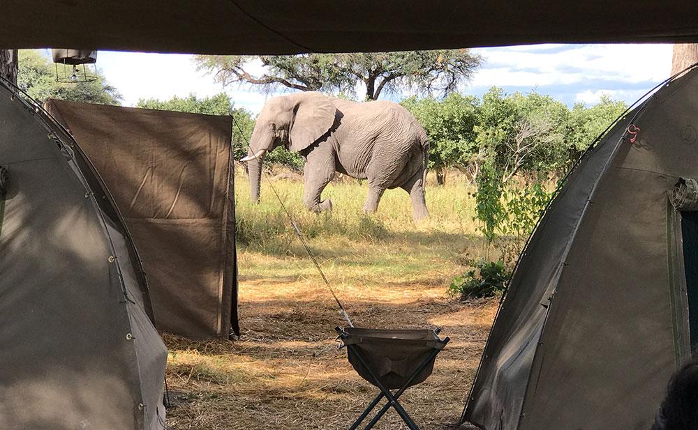 mobile tented camp, African safari, elephant, big 5 animal