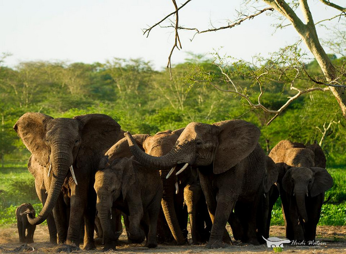elephant herd, wildlife, South Africa