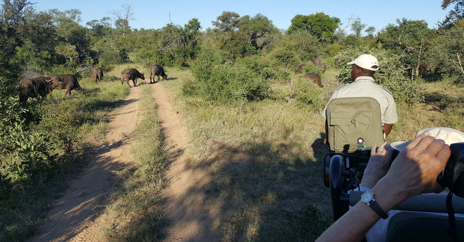 buffalo, game viewing vehicle, safari, Kruger National Park, South Africa